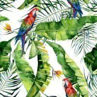 Druk velvet papugi